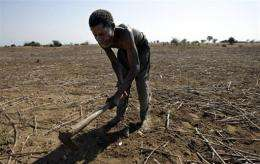 A Malawian farmer works at a field