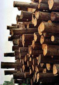 A new plant that produces gas from wood was opened in Austria