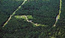 An oil palm plantation covers a swath of land where a forest once stood in the Miri interior