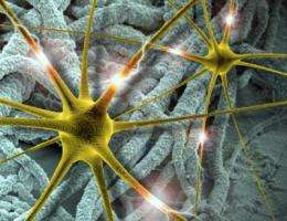 A step toward better brain implants using conducting polymer nanotubes