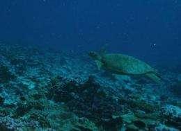 Barcoding endangered sea turtles
