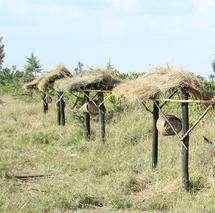 Beehive fence deters elephant raiders