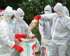 Bird flu virus remains infectious up to 600 days in municipal landfills