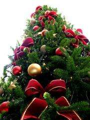 Newman Christmas Trees.Scientists Works To Develop Christmas Tree That Doesn T Shed