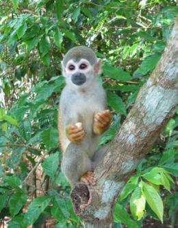 Color blindness cured in monkeys