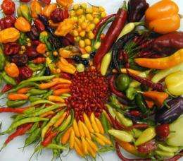 Domestication of Capsicum annuum chile pepper provides insights into crop origin and evolution