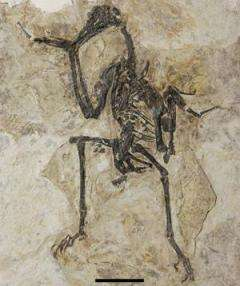 Earliest toothless bird found