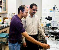 Engineer Discovers Why Particles Like Flour Disperse on Liquids