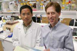 Enzyme fights mutated protein in inherited Parkinson's disease