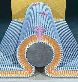 Fusion of Nanocircuits, Bio-membranes Creates New Hybrid Technology