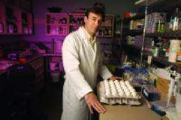 H1N1 pandemic virus does not mutate into 'superbug' in UMd. lab study