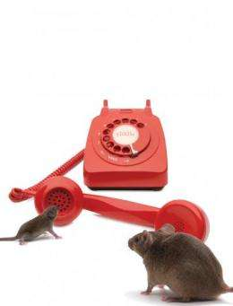 How young mice phone home: Study gives clue to how mothers' brains screen for baby calls