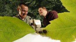 Inconspicuous leaf beetles reveal environment's role in formation of new species