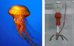 Jellyfish Robot Swims Like its Biological Counterpart