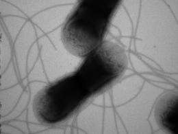 'Jumping genes' create antibiotic resistance in bacteria