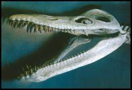 Genetic sex determination let ancient species adapt to ocean life