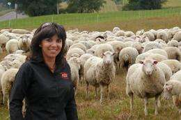 Mary had a lot of lambs: Researchers identify way to accelerate sheep breeding