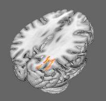 Matter in hand: Jugglers have rewired brains