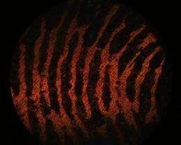 New advance in revolutionary 'bullet fingerprinting' technique