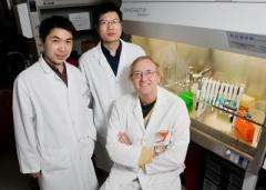 New drug agent knocks out multiple enzymes in cancer pathway