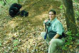 New evidence: AIDS-like disease in wild chimpanzees