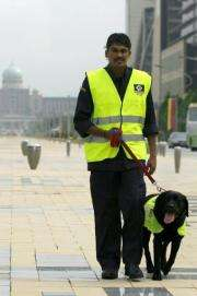 Paddy is specially trained to detect chemicals in the discs