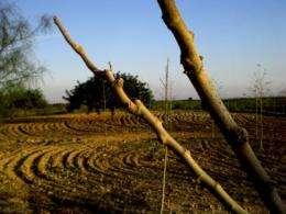 Perennial vegetation, an indicator of desertification in Spain