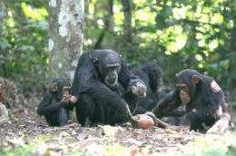 Primate archaeology sheds light on human origins