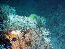 Protection plan deep-sea coral reefs considered (AP)