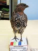 Scientists nail quail mystery
