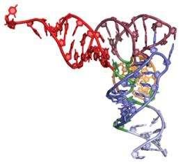 Secrets of a Life-Giving Amino Acid Revealed