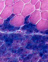 Stem cell surprise for tissue regeneration