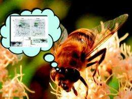 The biochemical buzz on career changes in bees