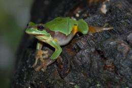 The first gene-encoded amphibian toxin isolated