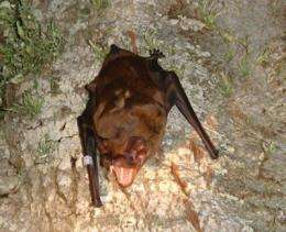 The largest bat in Europe inhabited northeastern Spain more than 10,000 years ago