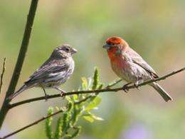 The Link Between Birdsong And Human Language