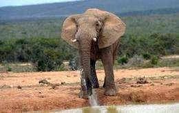 """The six elephants in Sierra Leone were shot and """"crudely butchered"""""""