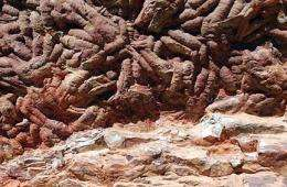 This undated picture released by the Spanish National Research Council (CSIC) shows fossilised tracks of the giant worm