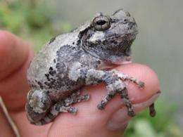 Timber harvest impacts amphibians differently during life stages