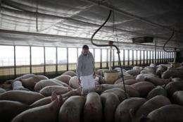 US moving closer to swine flu vaccine (AP)