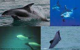 Whales and dolphins in hot water