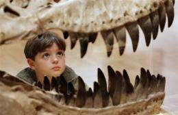 Will Murphy, 7, inspects the teeth of a Theropod dinosaur