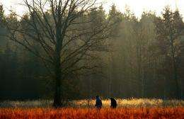 A couple walks past a meadow and a forest in 2008 near Munich, Germany