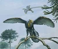 Archaeopteryx and the dinosaur-bird family tree