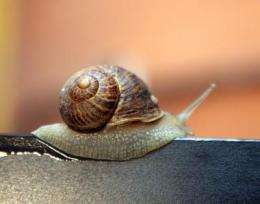 A study reveals the keys to the locomotion of snails