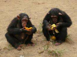 Collaboration encourages equal sharing in children but not in chimpanzees