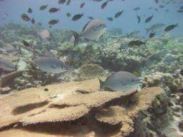 Decline and recovery of coral reefs linked to 700 years of human and environmental activity