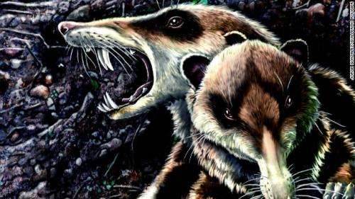 First known mammalian skull from Late Cretaceous discovered in South America