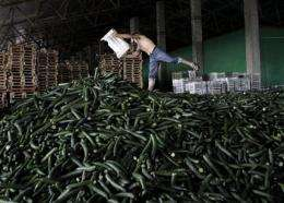 Germany backtracks on sprouts as E. coli source (AP)