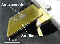 High efficiency infrared photodetectors using gold nanorods